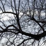 dead-tree-background_f1rxN2w_